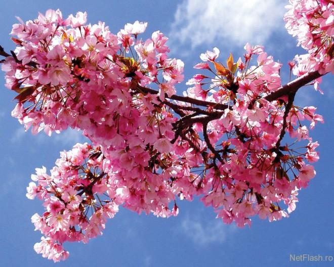 dureri articulare de primăvară)