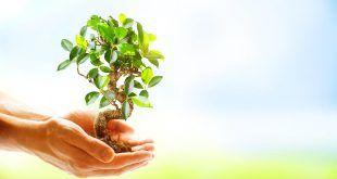campanie ecologizare